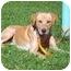 Photo 3 - Labrador Retriever Mix Dog for adoption in Austin, Minnesota - Stoney
