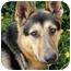 Photo 2 - German Shepherd Dog Mix Dog for adoption in Los Angeles, California - Jack von Nicholson