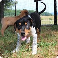 Adopt A Pet :: Outlaw - Foster, RI