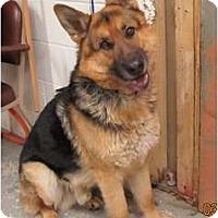 Adopt A Pet :: Tucker - Hamilton, MT