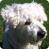 Adopt A Pet :: PJ - La Costa, CA