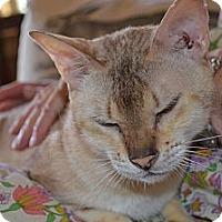 Adopt A Pet :: Cindy - Sanford, ME