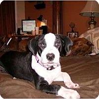 Adopt A Pet :: Benjamin (Bennie) - Orlando, FL