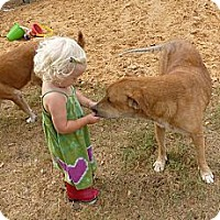 Adopt A Pet :: Dallas - Katy, TX