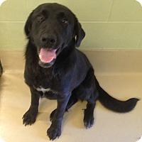 Adopt A Pet :: Sabrina - New Canaan, CT