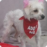 Adopt A Pet :: Jenny-WATCH MY VIDEO!!! - Irvine, CA