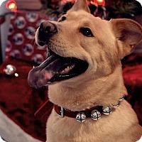 Adopt A Pet :: Mick - Fort Riley, KS