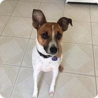 Adopt A Pet :: Milo - Blue Bell, PA