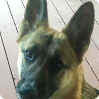Adopt A Pet :: Jase-Referral - Dripping Springs, TX