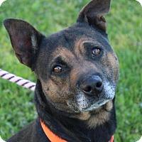 Adopt A Pet :: ZUZU - Red Bluff, CA