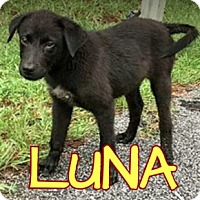 Adopt A Pet :: Luna - Virginia Beach, VA