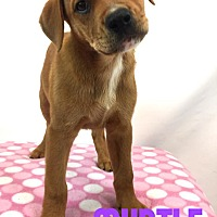 Adopt A Pet :: Myrtle - Toledo, OH