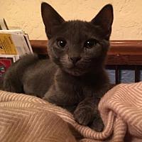 Adopt A Pet :: Sarah - Oviedo, FL