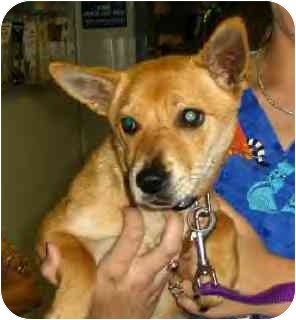 Terrier (Unknown Type, Small) Mix Dog for adoption in Kingwood, Texas - Shiela