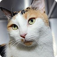 Adopt A Pet :: Juliet - New York, NY