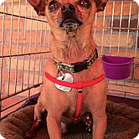 Adopt A Pet :: Jesse - North Hollywood, CA