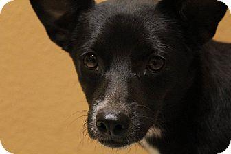 Terrier (Unknown Type, Medium) Mix Dog for adoption in Snyder, Texas - Lizzie