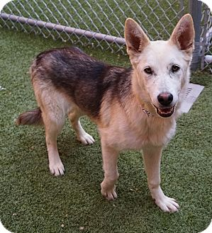 Husky Mix Dog for adoption in Farmington, New Mexico - Heart