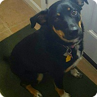 Adopt A Pet :: Lacey - Normandy, TN