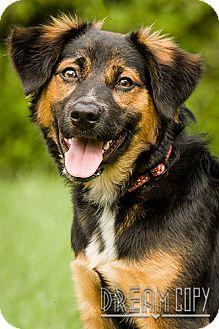Shepherd (Unknown Type) Mix Puppy for adoption in Owensboro, Kentucky - Molly