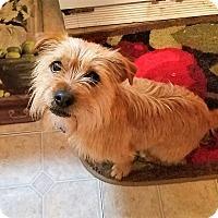 Adopt A Pet :: Precious - Richmond, VA