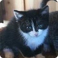 Adopt A Pet :: Boots - Parlier, CA