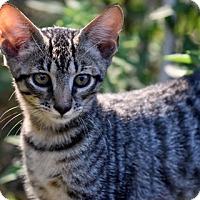 Adopt A Pet :: 71206 Ace - Wetumpka, AL