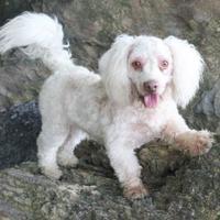 Adopt A Pet :: Jagger - Dalton, GA