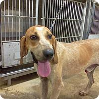 Adopt A Pet :: George - Upper Sandusky, OH