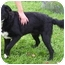 Photo 1 - Border Collie Mix Dog for adoption in Somerset, Pennsylvania - Sparky