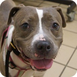 Terrier (Unknown Type, Medium) Mix Dog for adoption in Eatontown, New Jersey - Missy