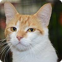 Adopt A Pet :: Morton (Morty) - Harrisburg, NC