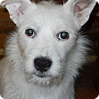 Adopt A Pet :: Willow - dewey, AZ