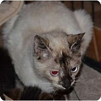 Adopt A Pet :: Lucy - Troy, OH