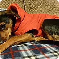 Adopt A Pet :: Minnie - Hamilton, ON