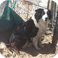 Adopt A Pet :: GRACE - Phelan, CA