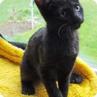 Adopt A Pet :: Nelson - N. Billerica, MA
