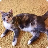 Adopt A Pet :: Lexi - Colmar, PA