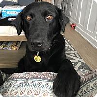 Adopt A Pet :: York - Parsippany, NJ