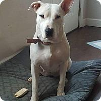 Adopt A Pet :: Aiyana - Windham, NH