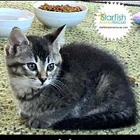 Adopt A Pet :: LoLo - Plainfield, IL