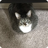 Adopt A Pet :: Margerie (COURTESY POST) - Baltimore, MD