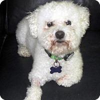Adopt A Pet :: Louie - Suffolk, VA