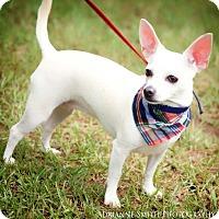 Adopt A Pet :: Angel Paloma - Barnesville, GA