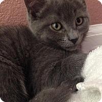 Adopt A Pet :: Pearl - Walnut Creek, CA