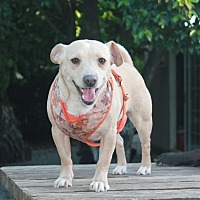 Adopt A Pet :: Captain  adoption fee $100 - Redding, CA