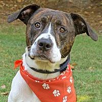 Adopt A Pet :: Charlie - Raleigh, NC
