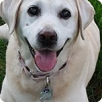 Adopt A Pet :: Chloe May - Torrance, CA