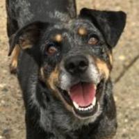 Adopt A Pet :: Kylie - Charleston, WV