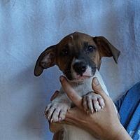 Adopt A Pet :: Zammis - Oviedo, FL